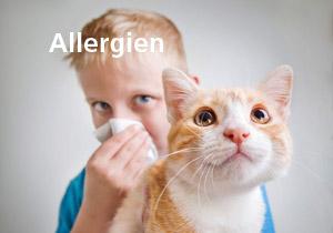 themen_02a_allergien_300x210px